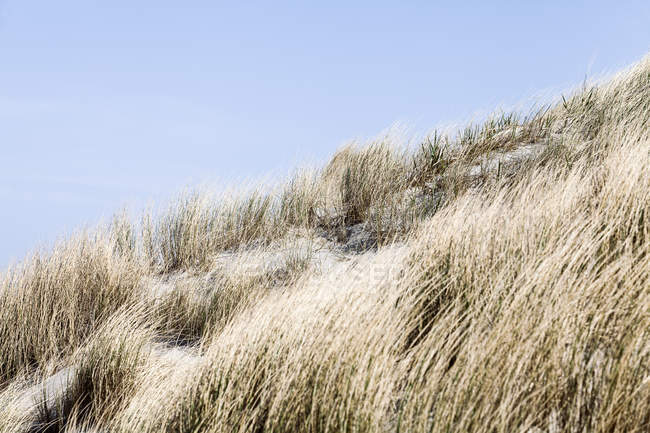 Grass bushes growing on sandy beach — Stock Photo