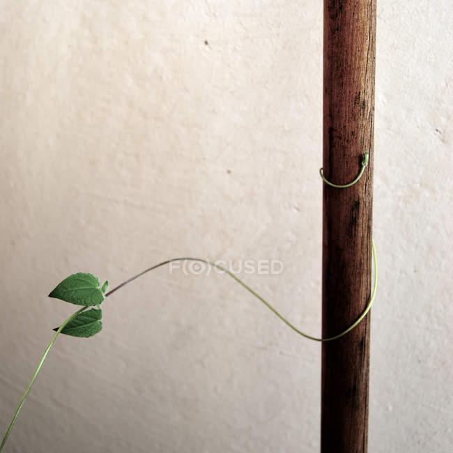 Folhas de plantas em Gavinha — Fotografia de Stock