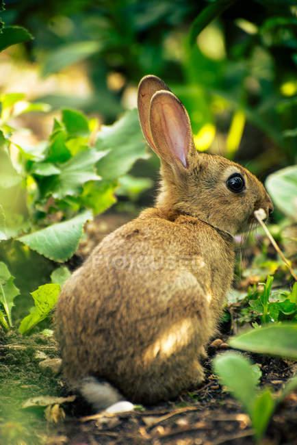 Крупным планом вид маленький кролик, сидя в траве — стоковое фото