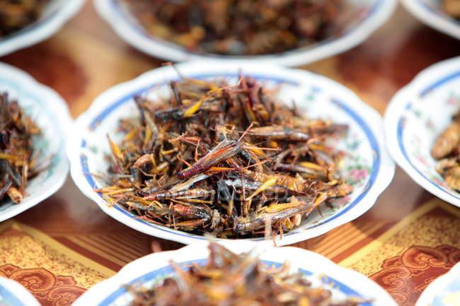 Insectos fritos en las placas de - foto de stock