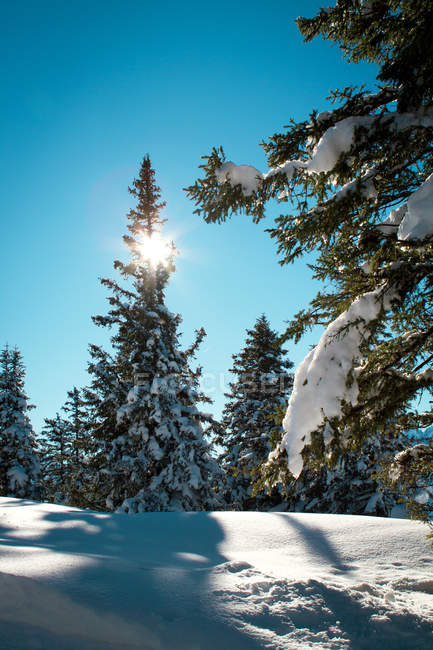 Sun beam lighting in the forest — Stock Photo