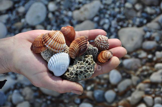 Vista do close-up da mão segurando conchas do mar e pedras-pomes — Fotografia de Stock