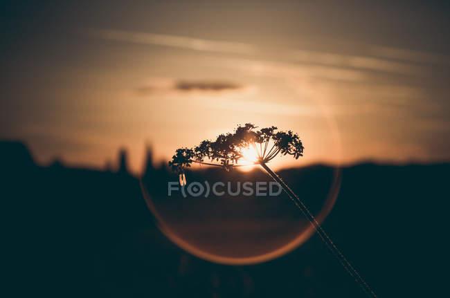 Sunsetl пейзаж с травяной завод — стоковое фото