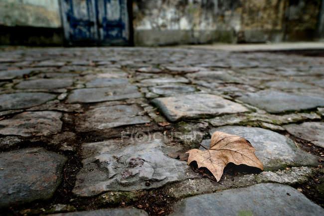 Folha outonal de desvanecimento em pedras de pavimentação — Fotografia de Stock