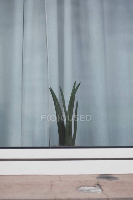 Growing houseplant in pot on windowsill in room — Stock Photo