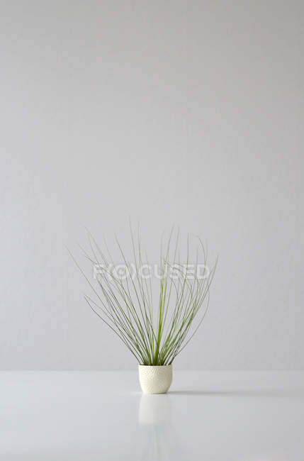 Growing houseplant in pot in white studio — Stock Photo
