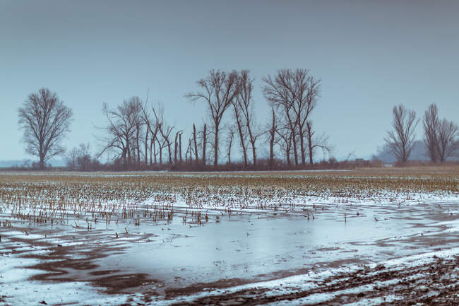 Cold weather in countryside field, frosty ground — Stock Photo