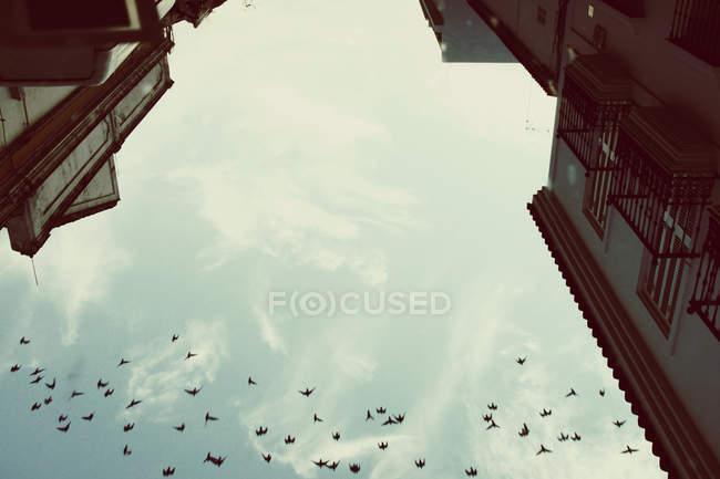 Uccelli che volano nel cielo — Foto stock