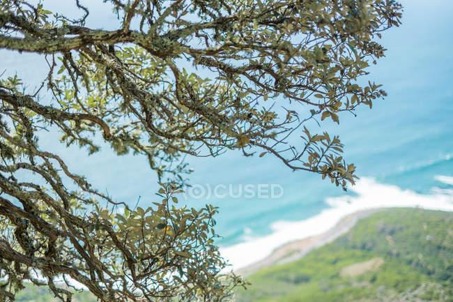 Coastal seascape and tree branches — Stock Photo