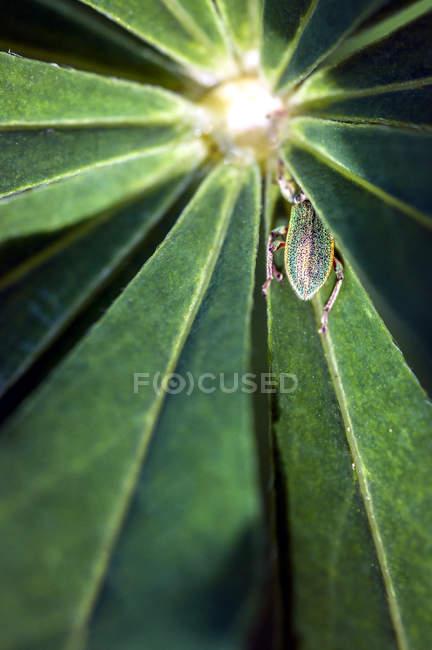 Помилка повзе зелене листя — стокове фото