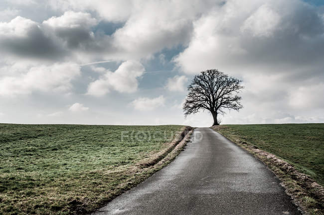 Frosty field view and tree — Stock Photo