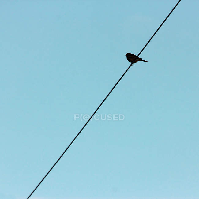 Low angle view of bird silhouette on wire — Stock Photo