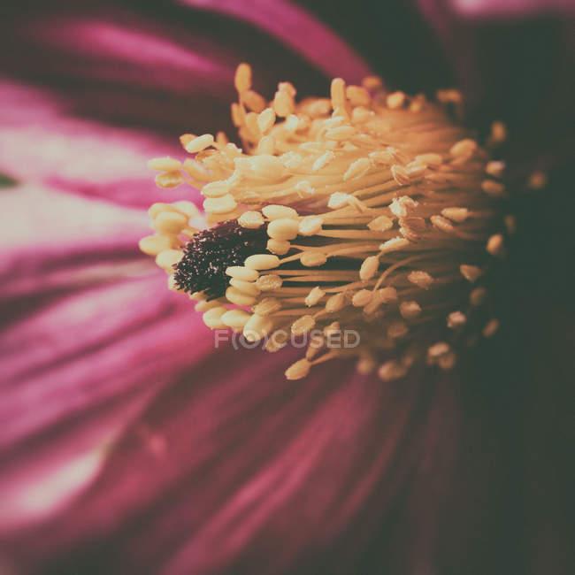 Крупным планом вид чашечки Блоссом цветок — стоковое фото