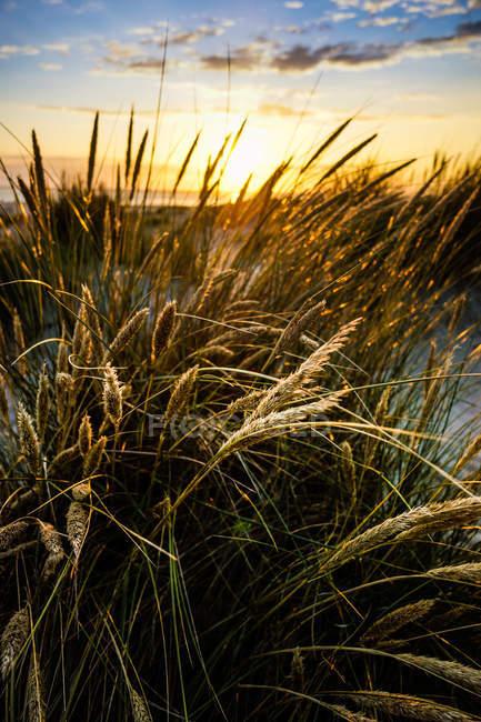 Lâmina de grama no campo — Fotografia de Stock