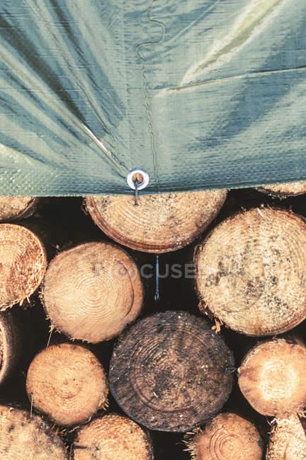 Catasta di legna da ardere che metà coperto con telo in polietilene — Foto stock