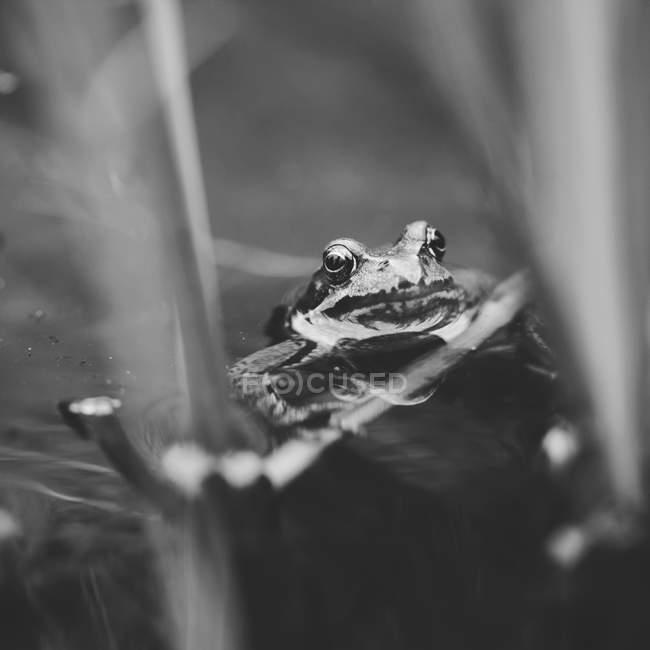 Лягушка сидит на лист — стоковое фото