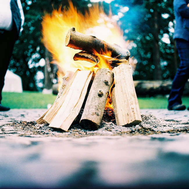 Burning firewood in camp fire — Stock Photo