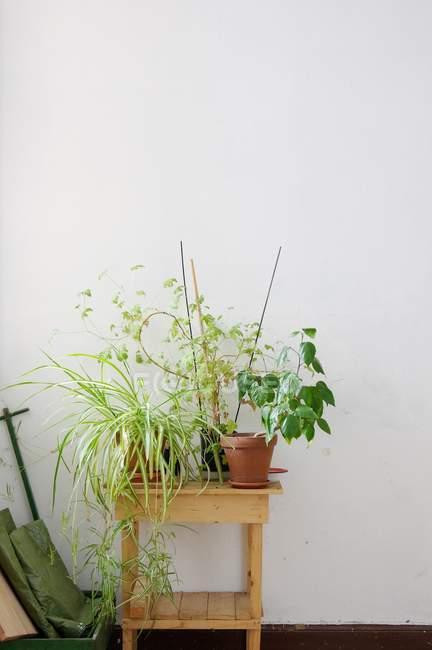 Выращивание комнатных растений в горшках на деревянных тумбочке в номере — стоковое фото