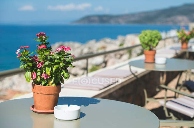 Tables with flower pots on cafe terrace — Stock Photo