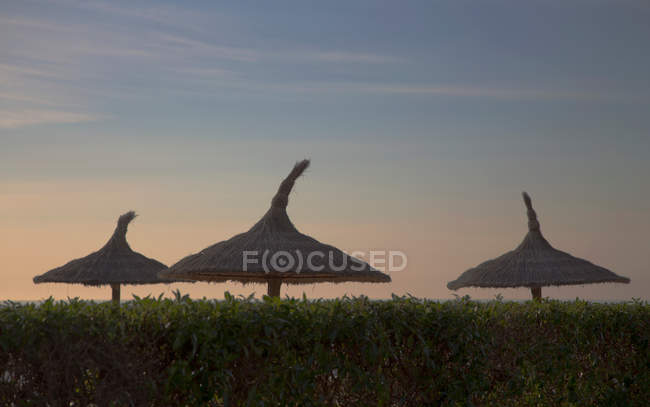 Three straw umbrellas over green bushes at sunset — Stock Photo