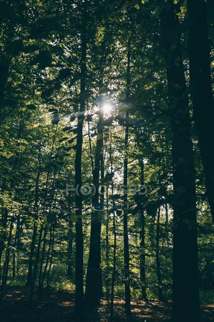 Пейзаж с видом на лес — стоковое фото
