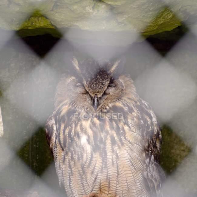 Primo piano dell'uccello del gufo — Foto stock