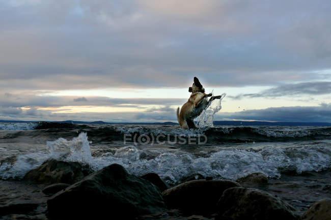 Вид ретривер веселиться в воде озера — стоковое фото