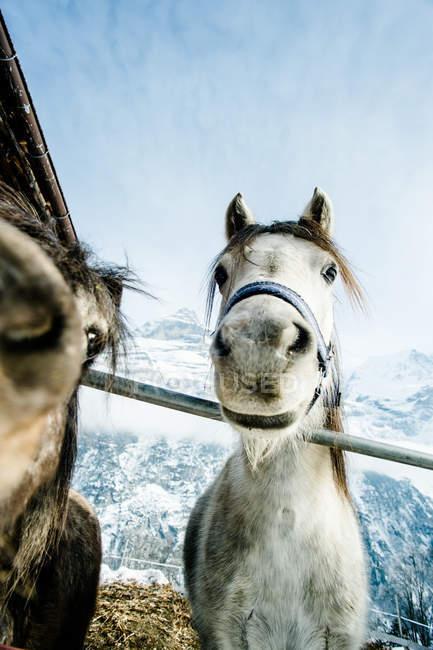 Animal focinho de cavalo — Fotografia de Stock