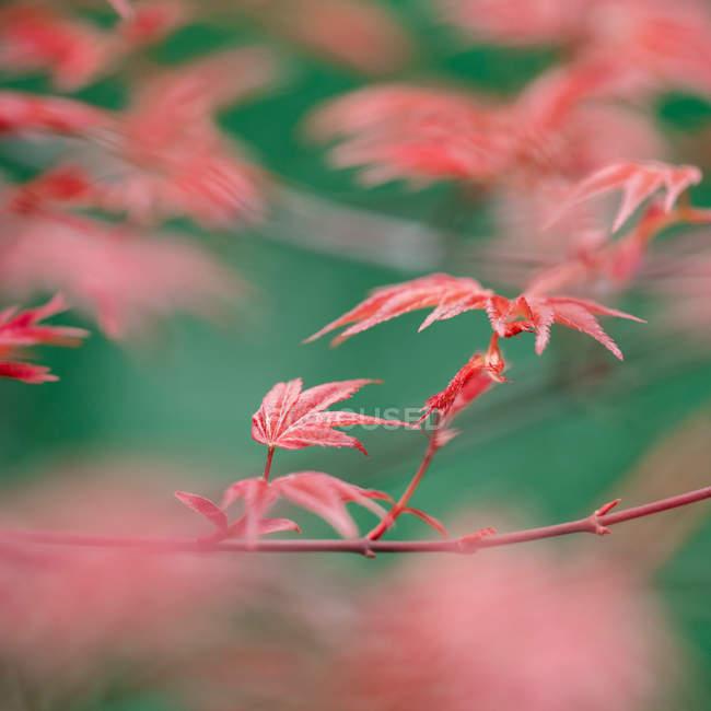 Blattpflanze Blätter — Stockfoto