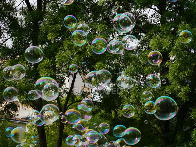 Colorful soap bubbles and green trees — Stock Photo