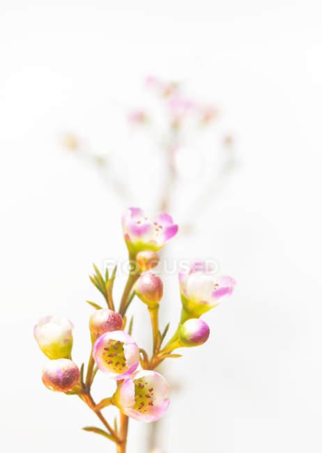 Blühenden Wildblumen — Stockfoto