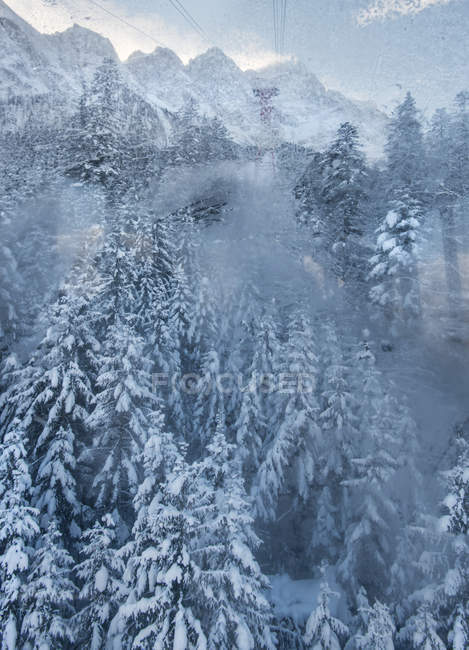 Snowy forest at winter — Stock Photo