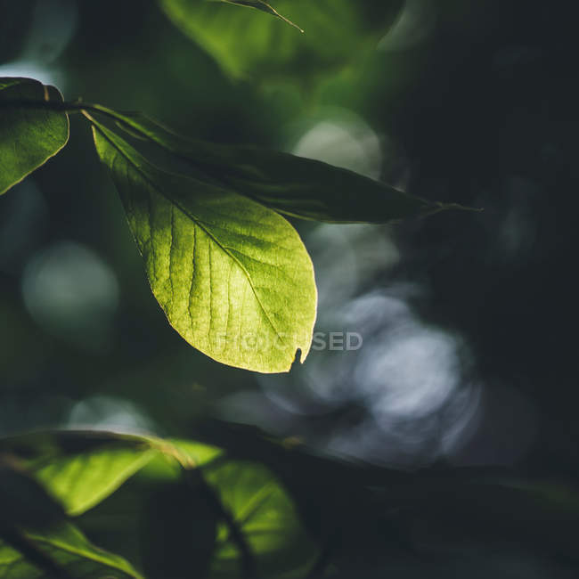 Spring foliage in the forest — Stock Photo