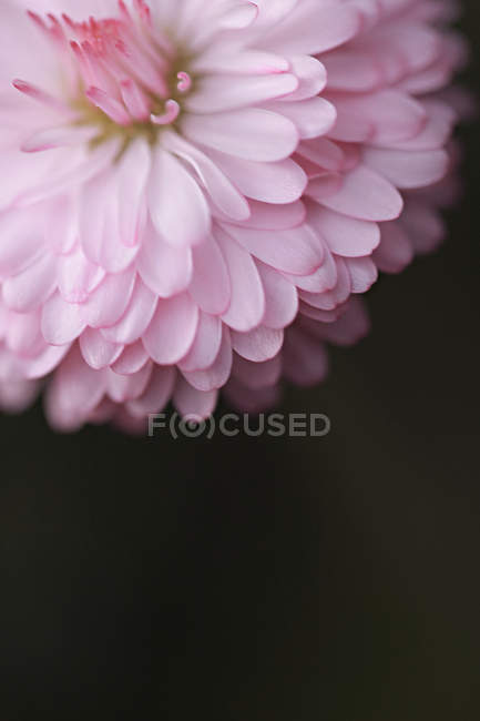 Closeup view of wild blooming flower calyx — Stock Photo