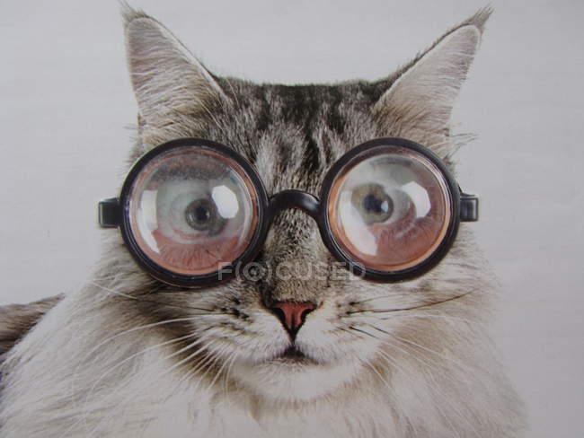 Lustige Katze in Gläsern — Stockfoto