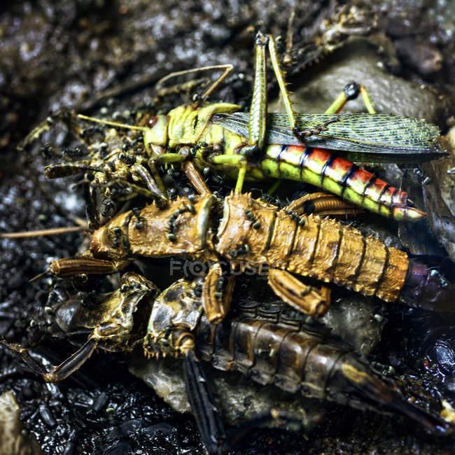 Vista diurna de insectos muertos en un montón - foto de stock