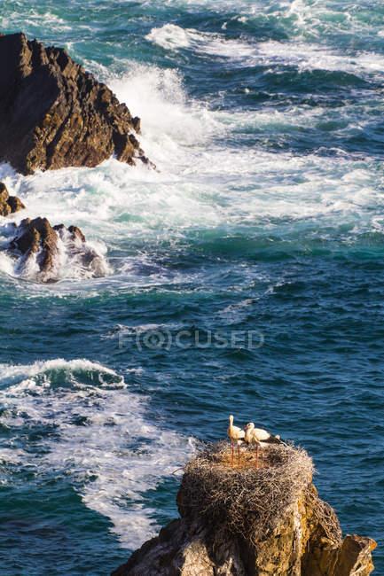 View of Algarve coast — Stock Photo