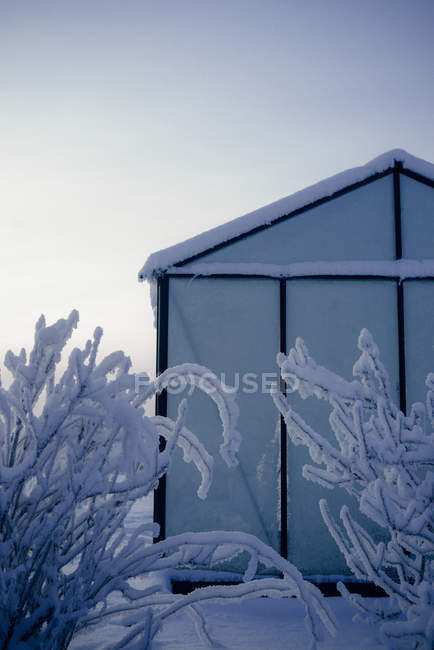 Glasshouse partial view in winter frosty and snowy day — Stock Photo