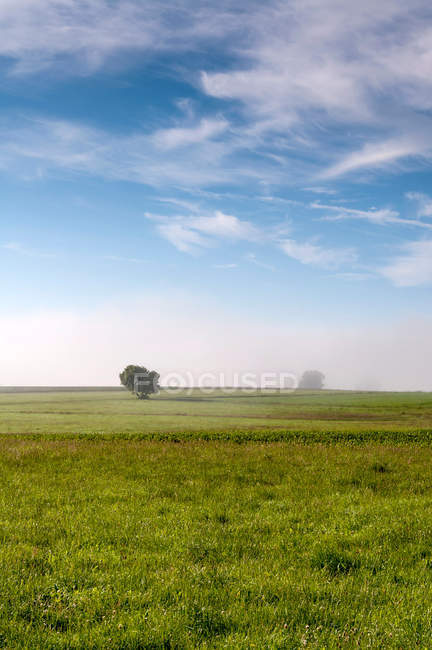 Agricultural field in sunny daytime — Stock Photo