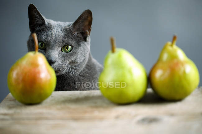 Cat standing near table with pears — Stock Photo