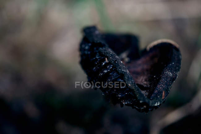 Growing mushroom, selective focus — Stock Photo