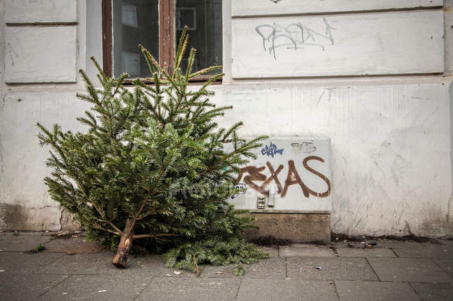 Daytime view of cut Christmas tree near building wall — Stock Photo