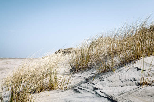 Grassgrass — стокове фото