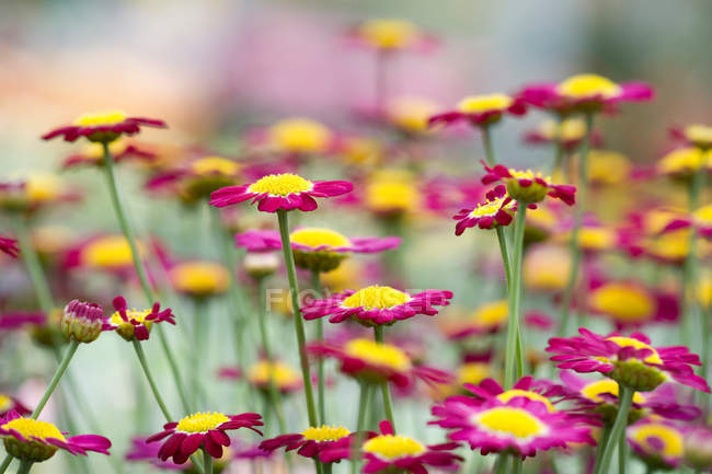 Closeup view of colorful flowers, selective focus — Stock Photo