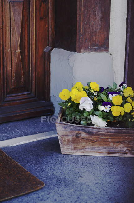 Growing houseplant with yellow white flowers in pot on floor at door — Stock Photo