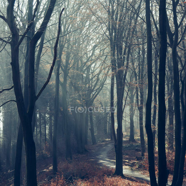 Landscape with forest footpath — Stock Photo