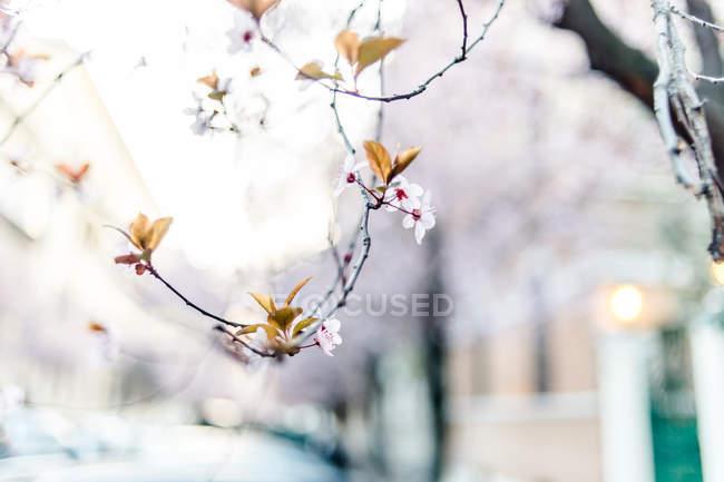 Galho com folhas novas e flores — Fotografia de Stock