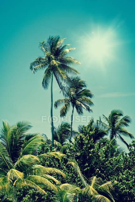 Tropical palms and bright shining sun in sky — Stock Photo
