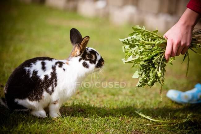 Вид сбоку лица кормления кроликов на зелёный луг — стоковое фото