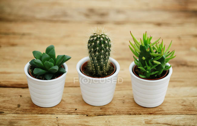 Cactus plants view — Stock Photo